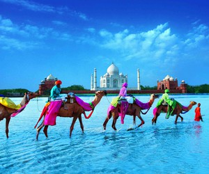camel, india, and travel image
