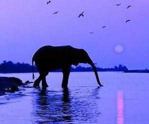 elephant, sunset, and animal image