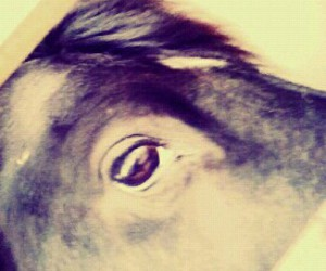 horse marques image