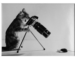 cat, photography, and mouse image