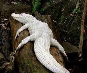 white, animal, and albino image