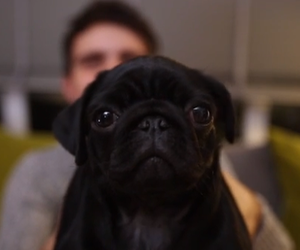 nala, zoe sugg, and pointlessblog image