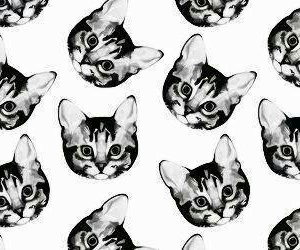 cats wallpaper image