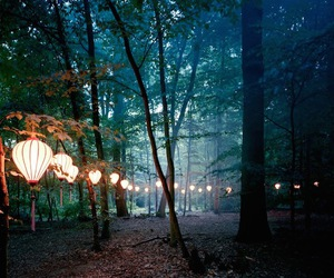forest and lights image
