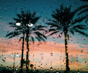 rain, palms, and palm trees image