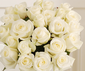 roses and white roses image