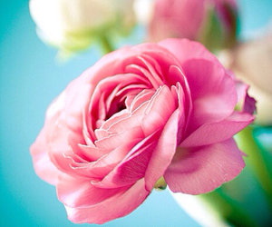 flowers, photography, and ranunculus image