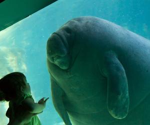 aquarium, beautiful, and little girl image