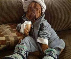dog, funny, and coffee image