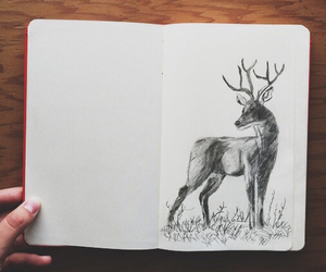 draw, what?, and venado image