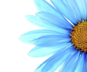 blue, flowers, and wallpaper image