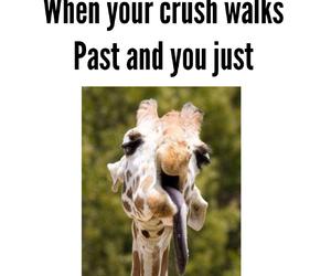 crush, boy, and giraffe image