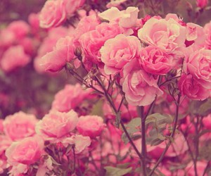 gorgeous, pink, and roses image