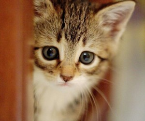 amazing, cat, and cute image