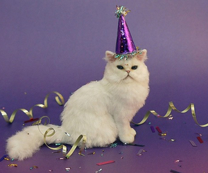 cat, party, and birthday image