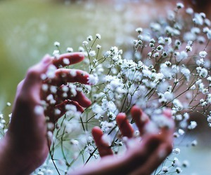 flowers, hands, and beautiful image