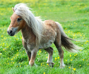 pony, horse, and animal image