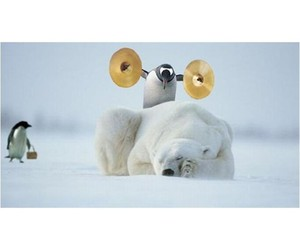 bear, funny, and penguin image