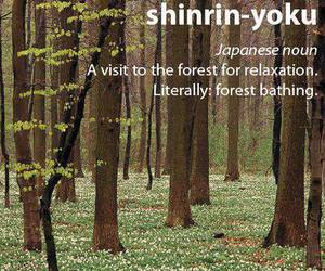 forest, japanese, and relax image