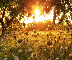 nature, photography, and sun light image