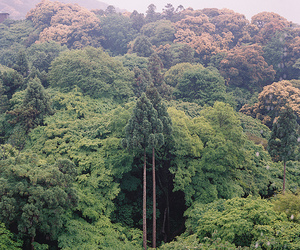 forest, tree, and trees image