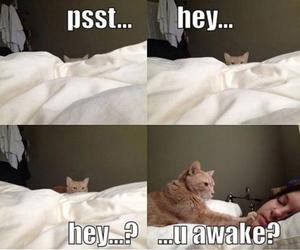 anna, elsa, and cats image