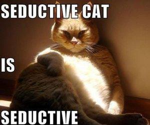 cat and seductive image