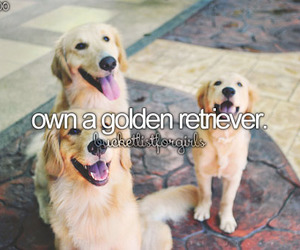 girly, dog, and golden retriever image