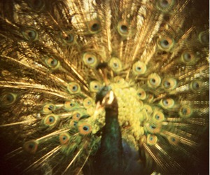 feathers, light, and vintage image