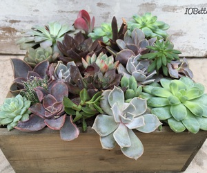 plants, style, and succulents image