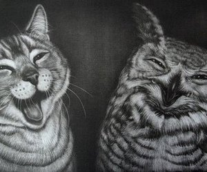 owl, cat, and black and white image