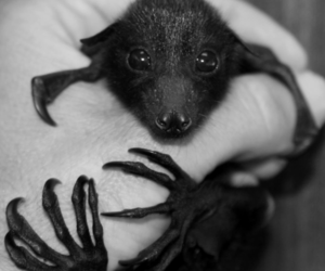 bat, animal, and black and white image