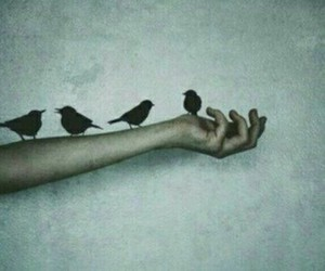 alone, birds, and Darkness image