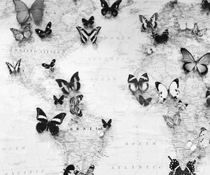 butterfly, map, and world image