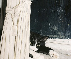 cat and grunge image