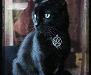 black, cat, and cute image