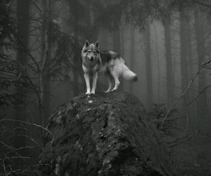 black, alone, and wolf image