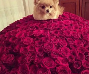 flowers, cute, and dog image