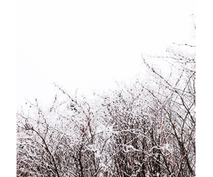 nature, snowing, and winter image