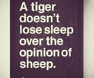 quote, tiger, and opinion image