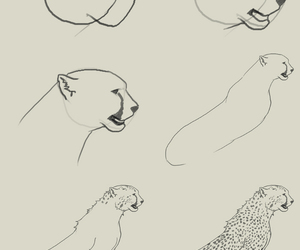 cheetah and how to draw image