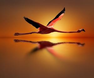 beauty, sun, and bird image