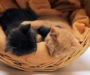 cat, animal, and basket image