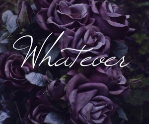 roses and whatever image