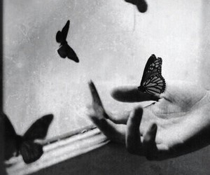 butterfly, sad, and dark image