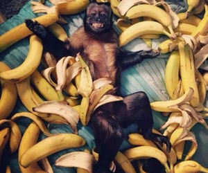 monkey, banana, and animal image