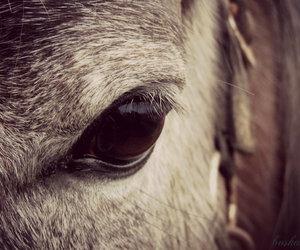 eye, horse, and sweet image