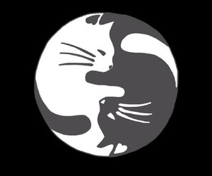 cat, white, and black image