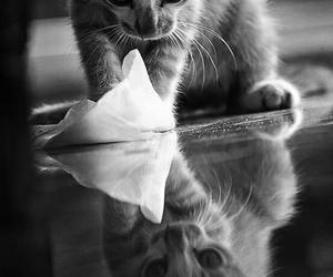animals, cat, and monochrome image