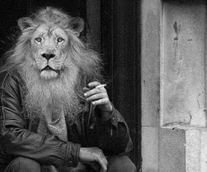 lion, black and white, and man image